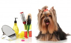 Dog-grooming-photo